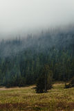 Forest in fog. Forest in the autumn mist Stock Image