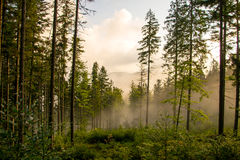 Forest in the fog. Babiogórski trail leading through a misty forest at the top of the mountain Diablak Stock Photo