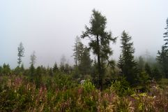 Forest in fog stock photos