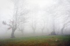 Forest with fog Royalty Free Stock Images