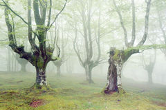 Forest with fog and beautiful light Stock Image