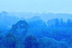 Forest. In fog  blue  of morning Royalty Free Stock Photos