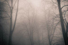 Forest with fog Royalty Free Stock Photo