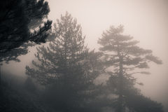 Forest with fog Royalty Free Stock Photography