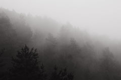 Forest in fog royalty free stock image