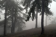 Forest Fog. Early morning in the foggy forest Stock Image