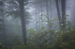 Forest with fog and flowers in bloom stock photos