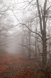 Forest with fog Stock Photo
