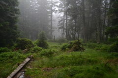 Forest in the fog. An image suitable for using in newspapers, on websites etc Stock Images