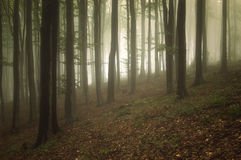 Forest with fog and light trough trees Stock Image