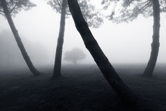 Forest with fog and lonely tree Stock Photo