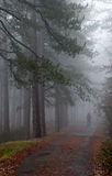 Forest with fog and man hiking Royalty Free Stock Photos