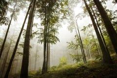 Forest with fog. Stock Photos