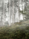 In the forest with fog Royalty Free Stock Images