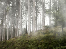 In the forest with fog Royalty Free Stock Image