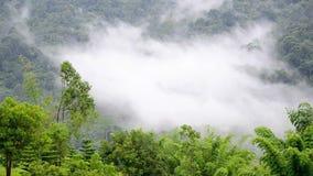Forest in the fog. Morning fog in dense tropical rainforest stock video