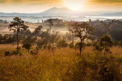 Forest and fog in the morning at Tung Salang Luang National Park Royalty Free Stock Photography
