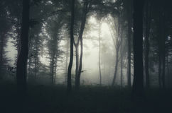 Forest with fog Royalty Free Stock Photos