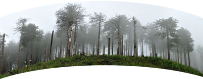 Forest in the fog panorama Royalty Free Stock Photos