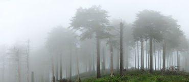 Forest in the fog panorama 3 Royalty Free Stock Images