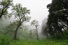 Forest in a fog Stock Photography