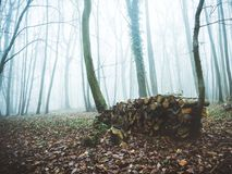 Forest in fog pruned with freshly. Cut wood for heating. Vexin France Stock Images