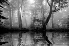 Forest with fog Stock Images