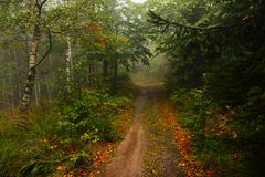 Forest, fog, road, rain, trees, leaves, a forest route, autumn, path Stock Image