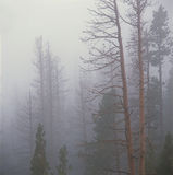 Forest Fog, Rocky Mountain National Park, le Colorado Photographie stock