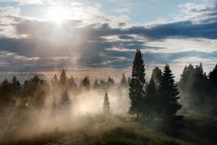 Forest with fog and sky with clouds and sun Royalty Free Stock Photography