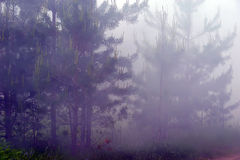 Forest in the fog and smoke Royalty Free Stock Photography