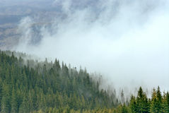 Forest in fog and snow. Mountain forest in fog and snow Stock Images