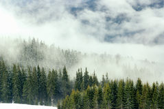 Forest in fog and snow. Mountain forest in fog and snow Stock Photos