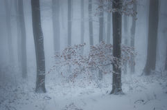Forest with fog and snow in winter Stock Photo