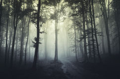 Forest fog Stock Photography