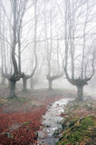 Forest with fog and stream Stock Photography