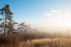 Forest and fog at sunset lanscape Stock Photos
