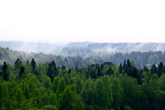 Forest fog on a top of a mountian Royalty Free Stock Images