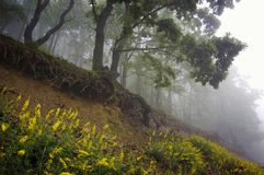 Forest with fog trees and beautiful yellow flowers Stock Image