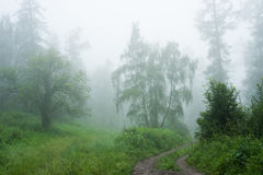 Forest in fog. Trekking in the Altai Mountains Stock Photos