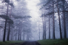 forest in fog Stock Photography