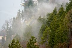 Forest and fog views. A thick cloud of tiny water droplets suspended in the atmosphere at or near the earth`s surface that obscures or restricts visibility to Royalty Free Stock Photos