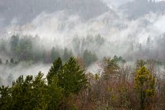 Forest and fog views. A thick cloud of tiny water droplets suspended in the atmosphere at or near the earth`s surface that obscures or restricts visibility to Royalty Free Stock Photography