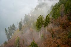 Forest and fog views. A thick cloud of tiny water droplets suspended in the atmosphere at or near the earth`s surface that obscures or restricts visibility to Stock Image