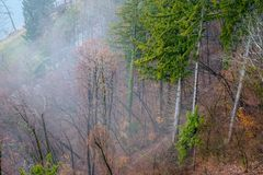 Forest and fog views. A thick cloud of tiny water droplets suspended in the atmosphere at or near the earth`s surface that obscures or restricts visibility to Stock Photography