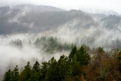 Forest and fog views. A thick cloud of tiny water droplets suspended in the atmosphere at or near the earth`s surface that obscures or restricts visibility to Stock Photos