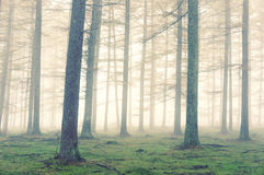 Forest with fog and vintage effect Stock Images