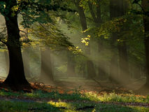 Forest with fog and warm sunshine Stock Photo