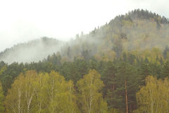 Forest in fog. Wild autumn forest in fog mountains Royalty Free Stock Photography