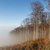 Forest in fog Royalty Free Stock Photo
